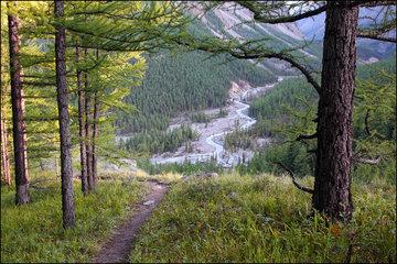 На Алтае будет сформирован стратегический запас семян для восстановления лесов за Уралом