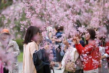 Как японских школьников учат любоваться природой