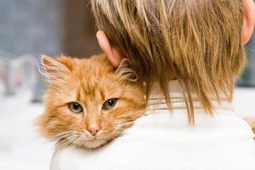 Японские ученые выяснили, что кошки откликаются на свое имя для выгоды