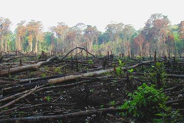 Как потеря среды обитания может дестабилизировать экосистемы