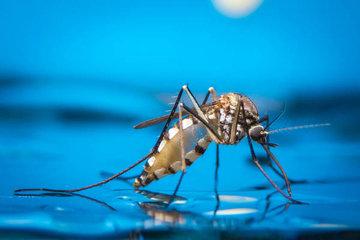 Как предотвращали распространение комаров в водных экосистемах