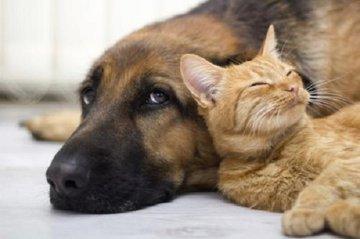 Битва умов: кошки проигрывают собакам