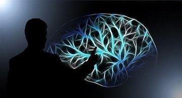 Может ли мозг включить программу самоуничтожения?