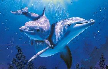 Чем по ночам занимаются дельфины